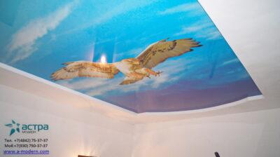 Фотопечать ястреб на потолке